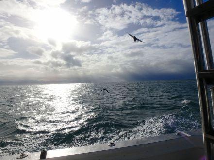 Excursión tiburones